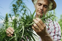 Federal Industrial Hemp Reform on the Horizon Thumbnail